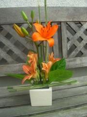 lys orange.JPG