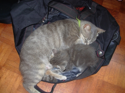 chats , valise.JPG