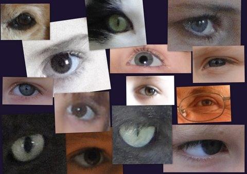 yeux1-1 catherine.jpg