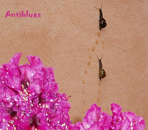 antiblues.jpg