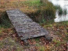 fei-tn-un-petit-pont-de-bois-jpg-1024-768.jpg