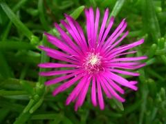 fleur rocaille 2.JPG