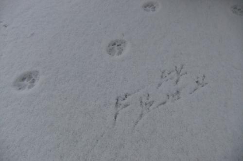 pattes neige MC.jpg